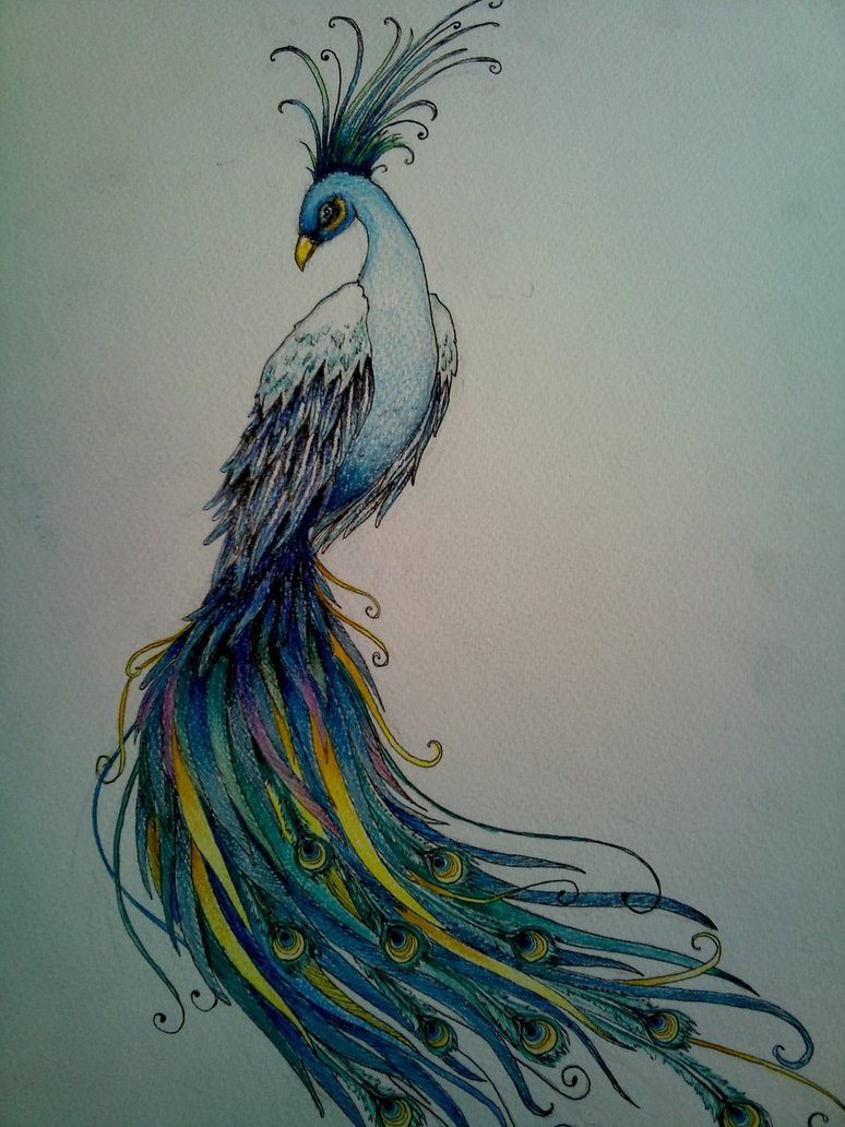 774x1032 Peacock Doodle By Kirstynoelledavies