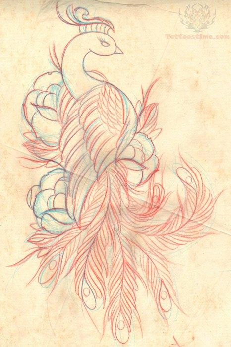 466x700 Peacock Drawing Tattoo Sample Tattoo Lt3 Drawing