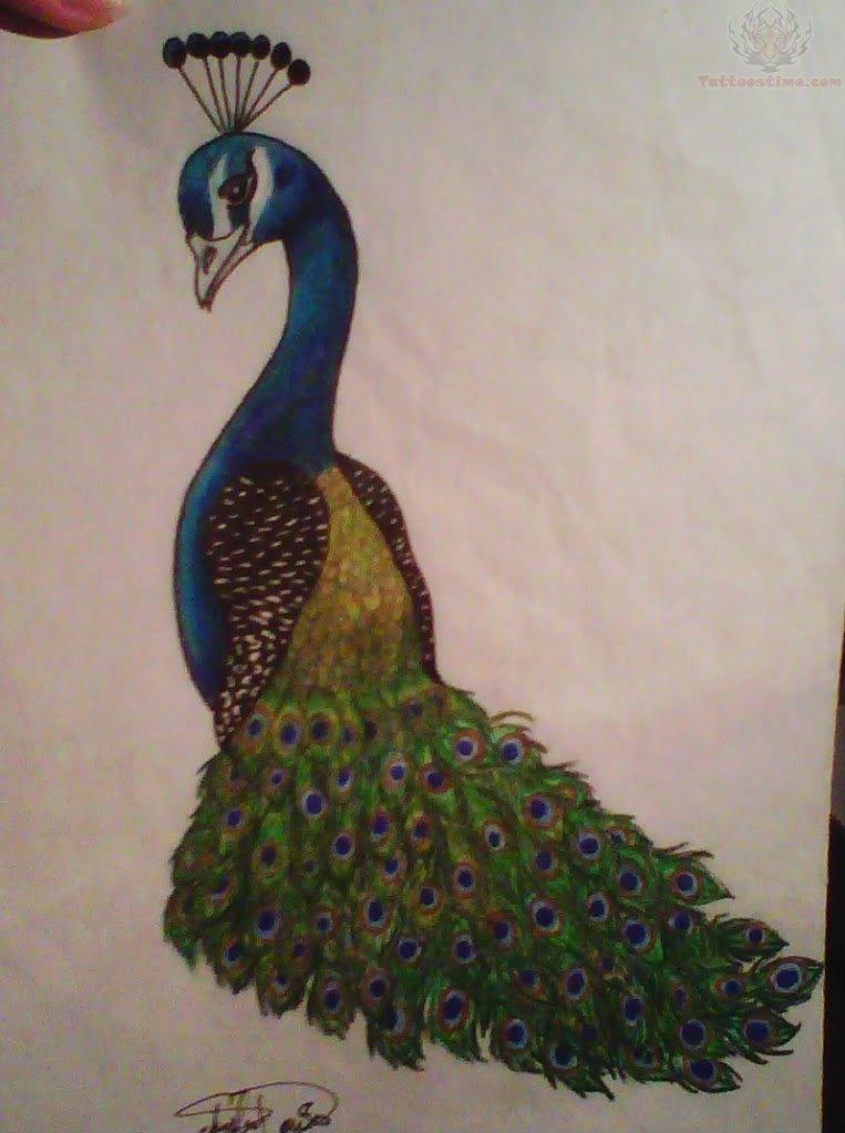 763x1023 Peacock Tattoo Drawing