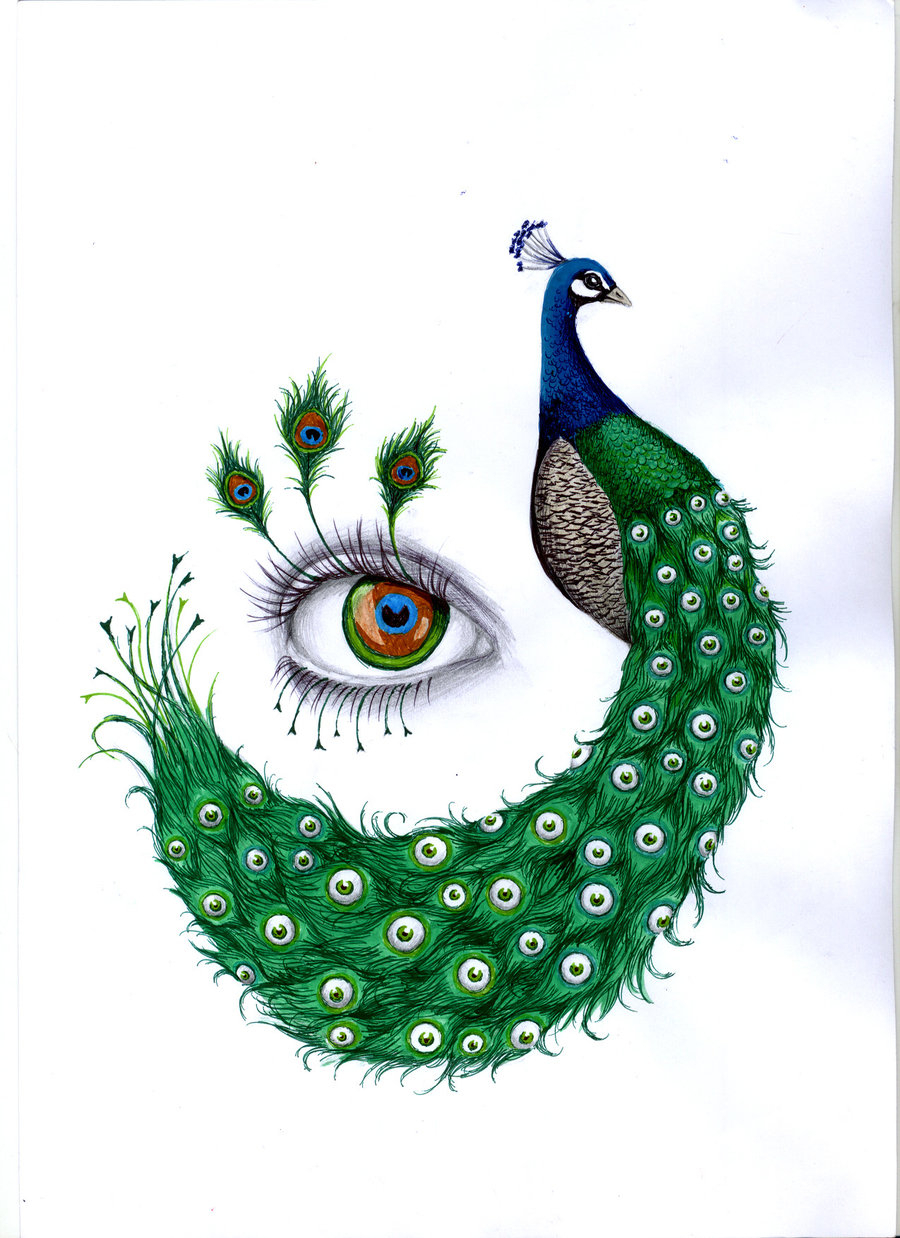 Peacock Drawing With Colour At Getdrawings Free Download