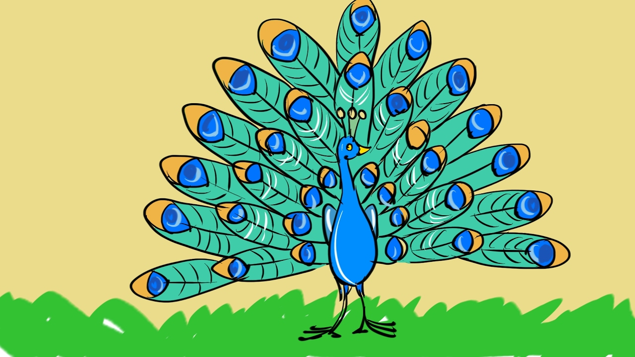Peacock Images Drawing at GetDrawings.com | Free for personal use ...