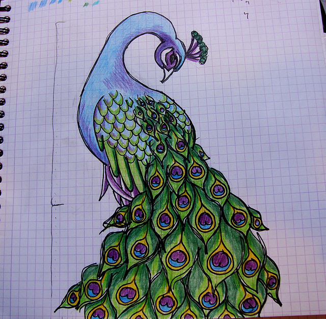 640x627 Images Of Peacock For Drawing