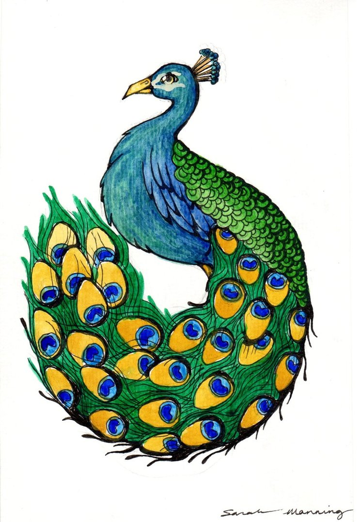 743x1076 Peacock Drawing ~ 3d Drawing