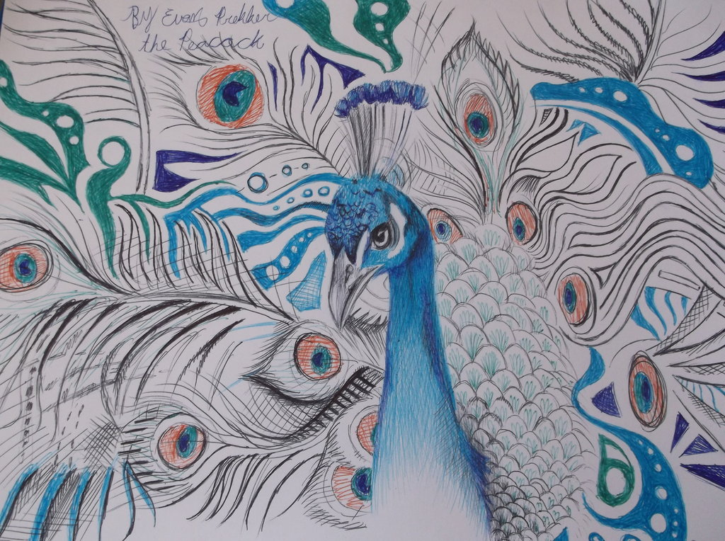 1024x764 peacock drawings the peacock wip pen drawing by dustywallpaper