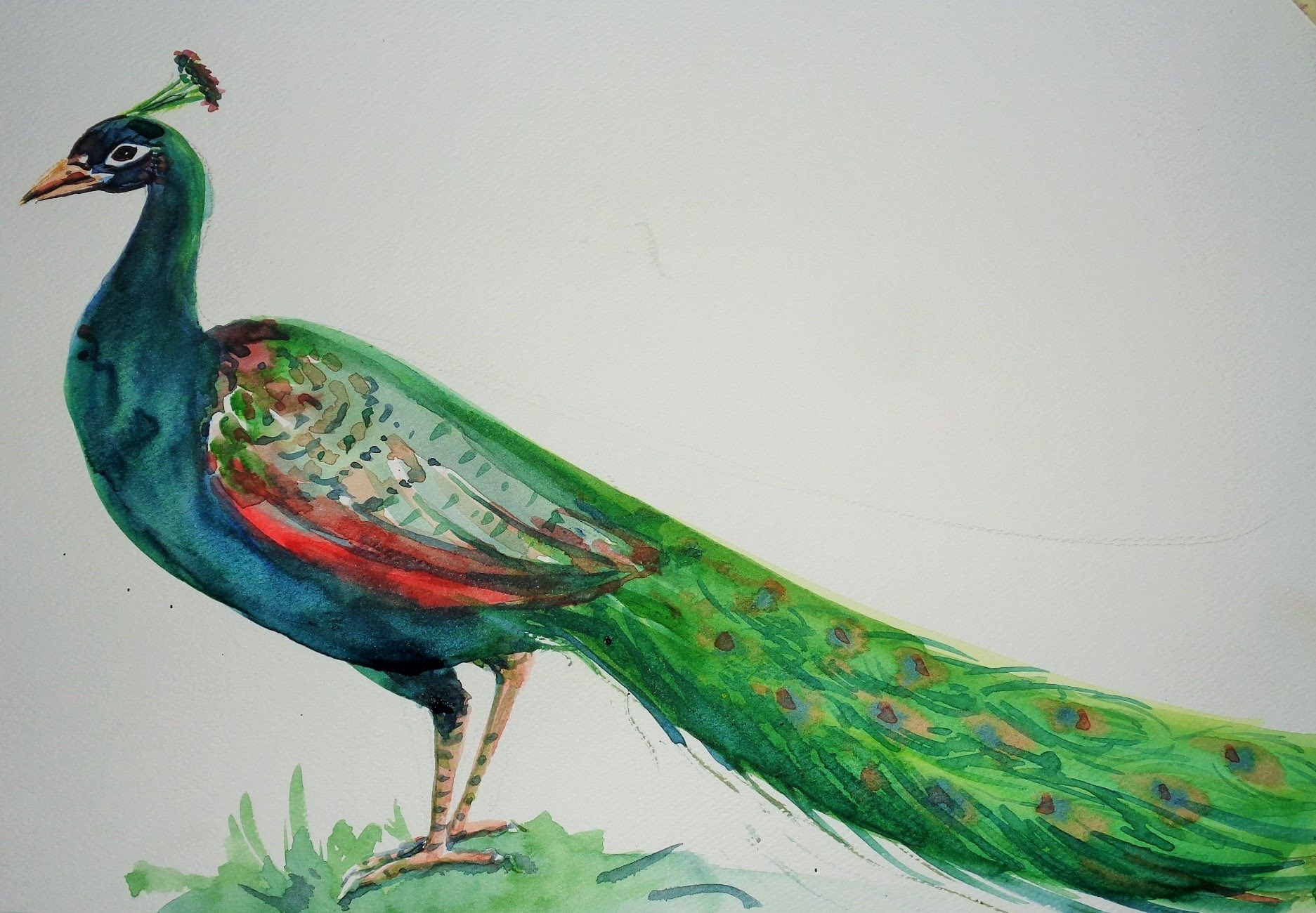 Peacock Pencil Drawing at GetDrawings | Free download