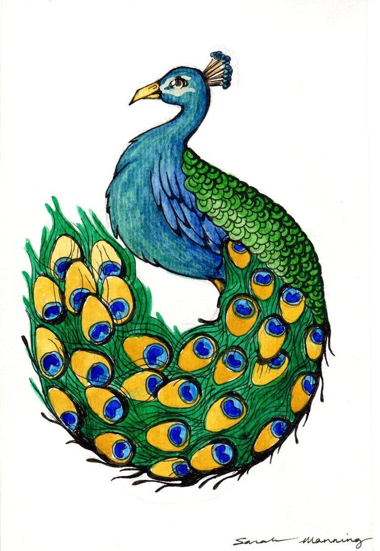 743x1076 Pictures Of Peacock For Drawing How To Draw A Peacock Peacock