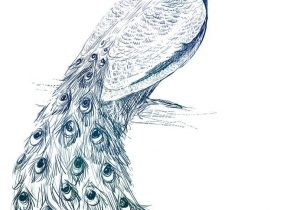 300x210 Sketches Of Peacock Sketches Of Peacock Simple Sketches Of Peacock