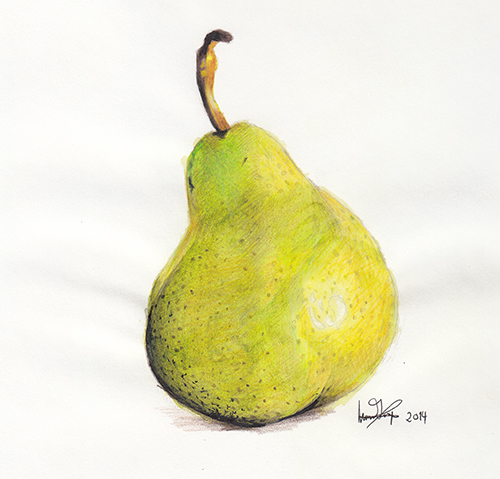 500x479 Pear Drawing Sketches