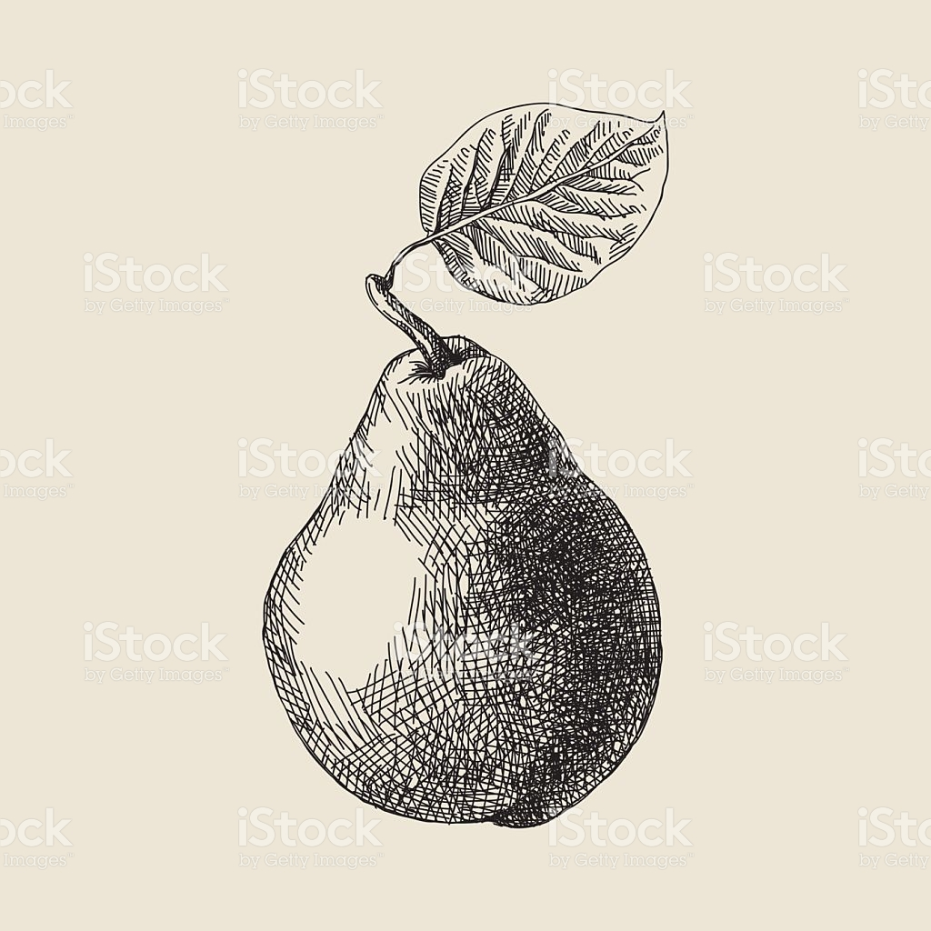 1024x1024 Vector Illustration Of Pear. Pear, Vector Art And Royalty