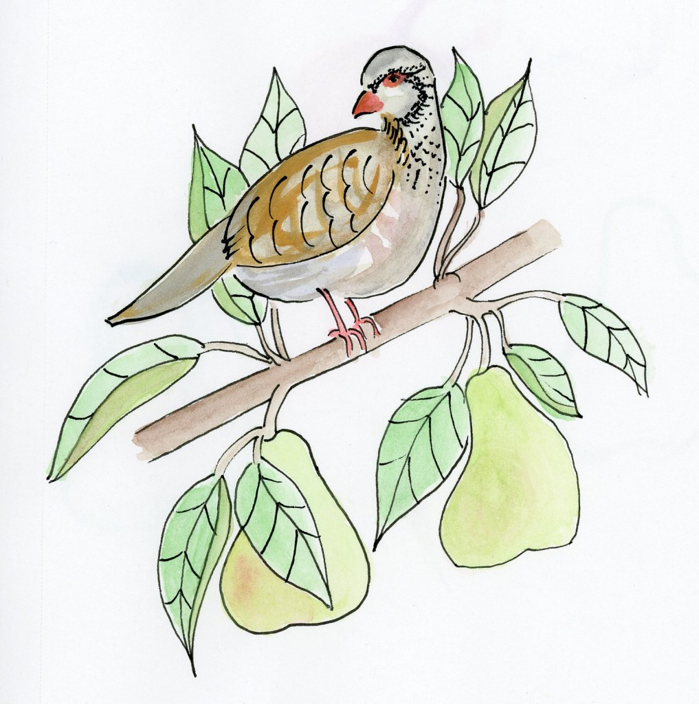 1017x1024 Partridge In A Pear Tree Drawing In The Margins