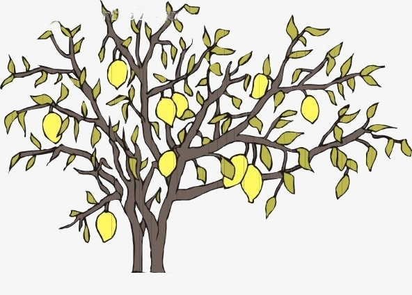 592x425 Pear Tree Branches, Pear, Fruit, Drawing Png Image And Clipart