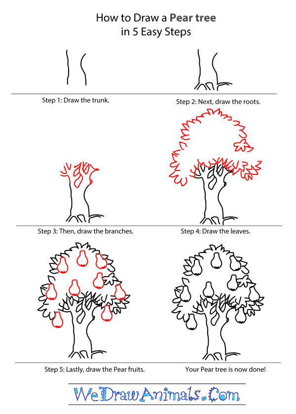 600x838 Pear Tree Tutorial.png