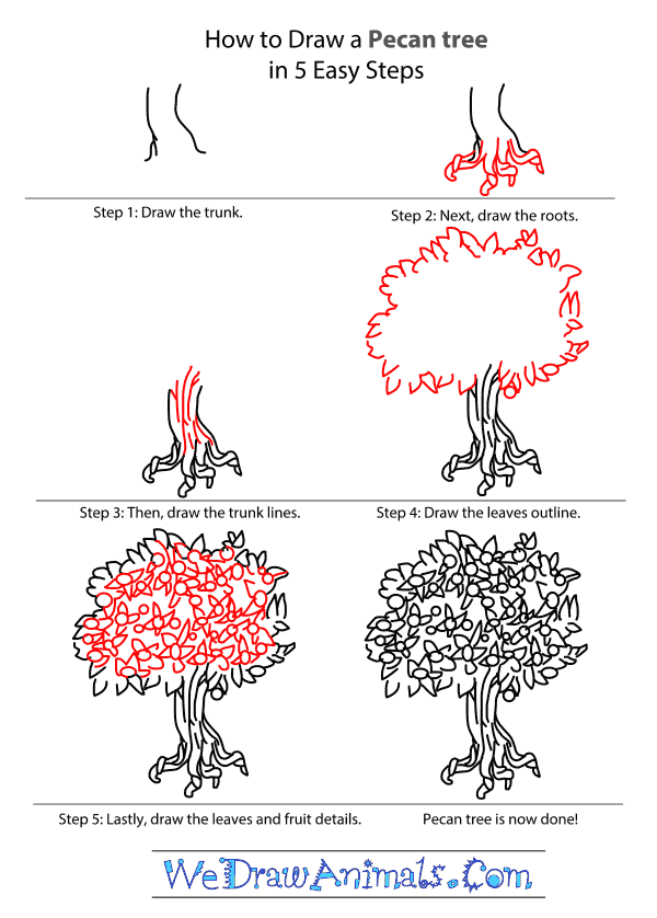 600x838 How To Draw A Pecan Tree Paisley