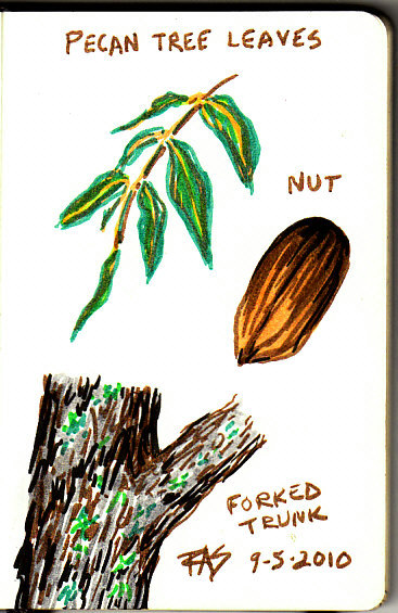 367x565 Life Sketches Of Pecan Trees