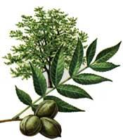 175x199 Vegetarians In Paradisepecan Historypecan Nutritionpecan