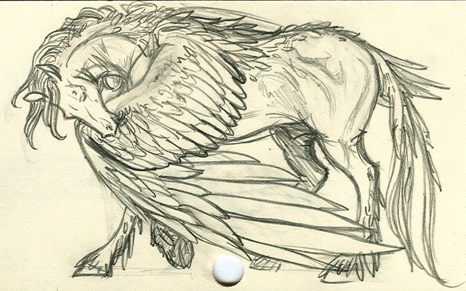 923x578 Always Wanted To Draw A Pegasus But I Never Could Get The Wings