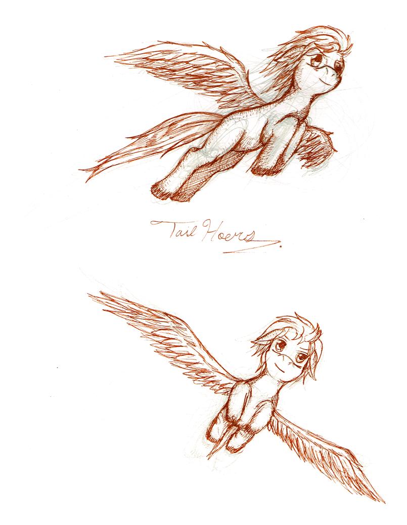 805x1037 Pegasus Jbarkerdesigns