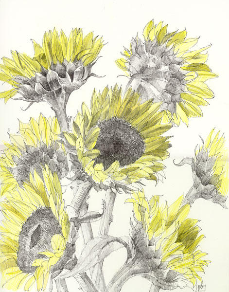Pen And Ink Flower Drawing at GetDrawings com | Free for