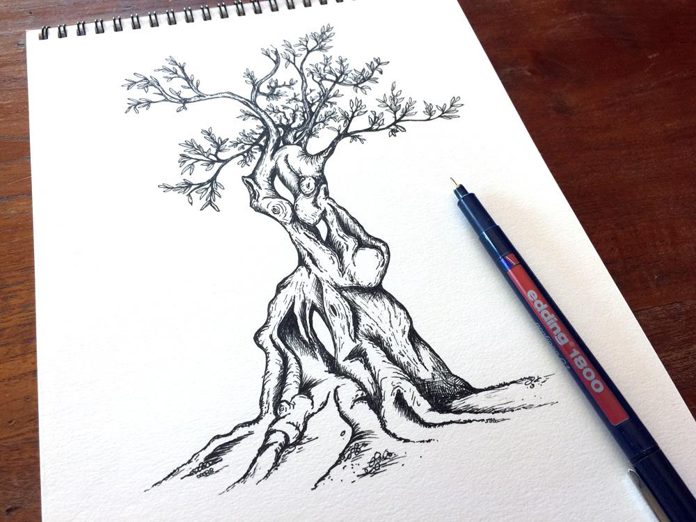 1000x750 Olive Tree Sketch Pen Drawing Tidy Design Blog