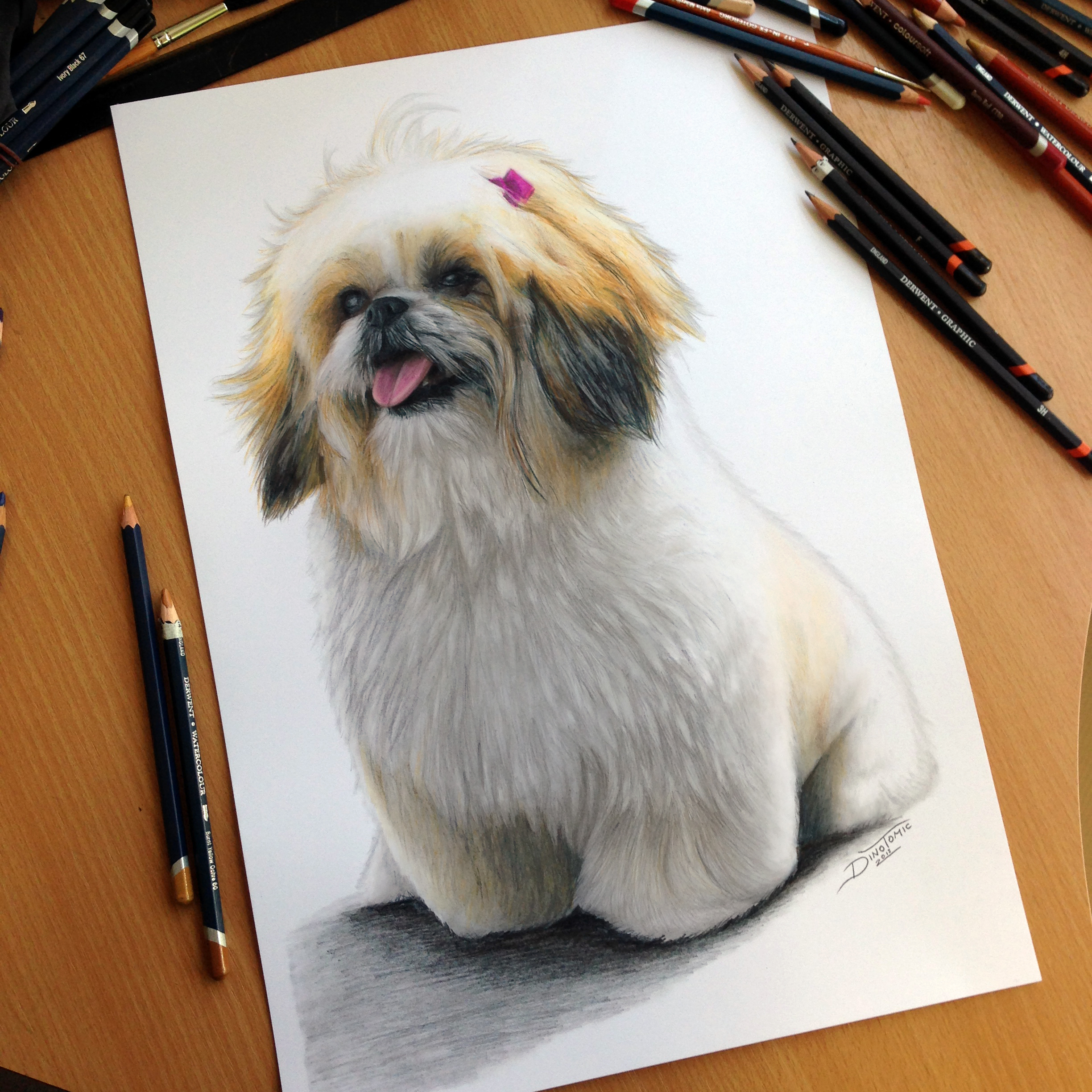 2448x2448 Color Pencil Drawing Of A Dog By Atomiccircus