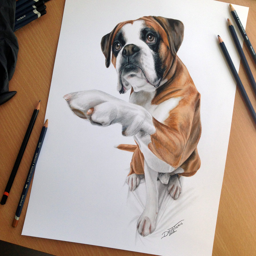 894x894 Dog Color Pencil Drawing By Atomiccircus