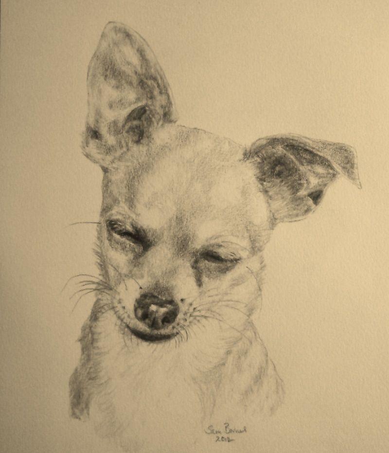 800x932 Personalised Pet Drawings