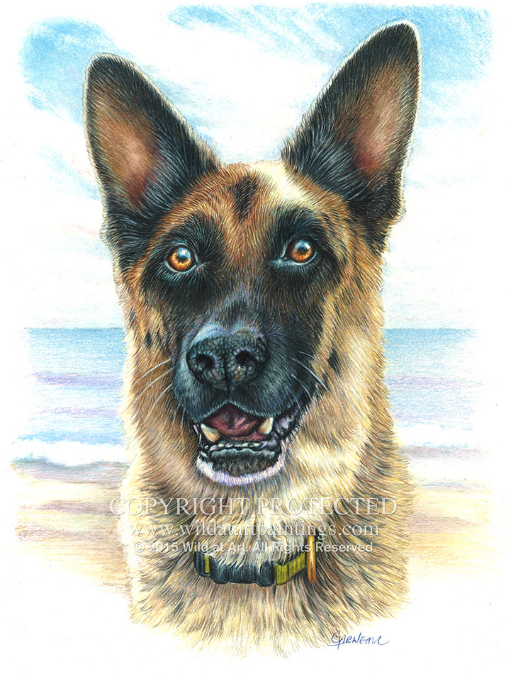 714x954 Pet Portrait Colored Pencil Drawings Gallery 1