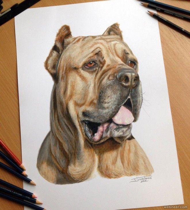 660x729 Dog Color Pencil Drawing Rysunek Dog Drawings, Dog