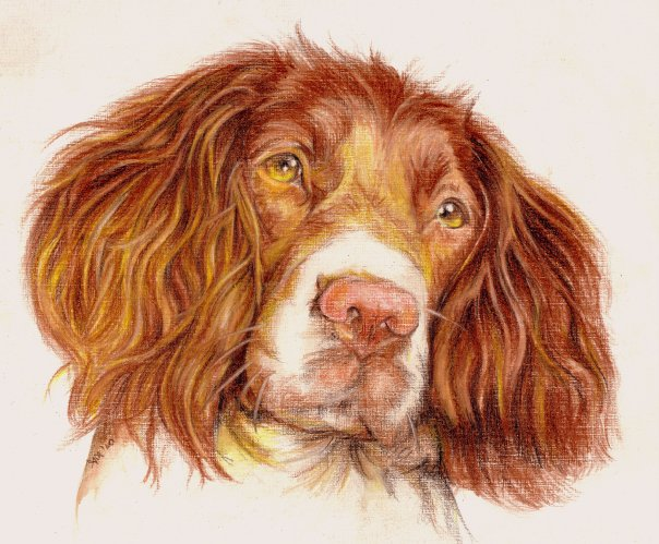 604x499 Dog Color Pencil Drawing By Andrea Image Preview Image