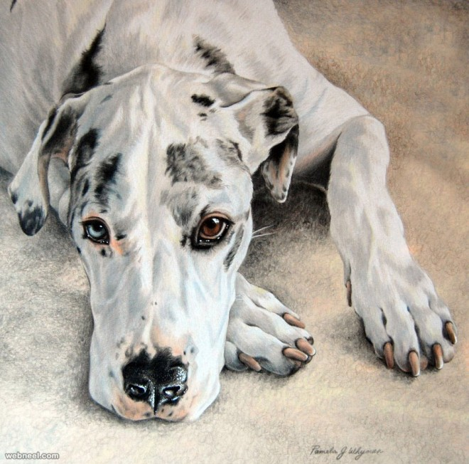 660x652 Dog Colored Pencil Drawing By Lightcircleart 23