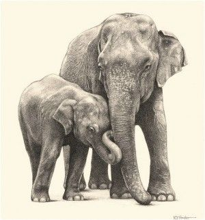 300x322 39 Best Pencil Drawing Of Elephants Images On Elephant