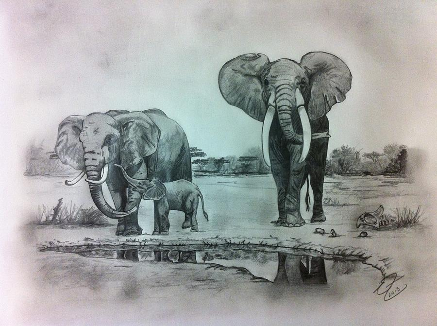 900x671 african elephants drawing by erin filan