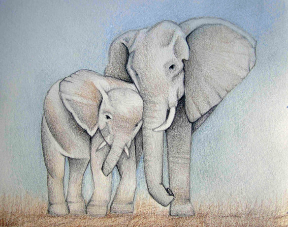585x462 Elephant Drawings Free Printable, Jpeg, Png Format Download