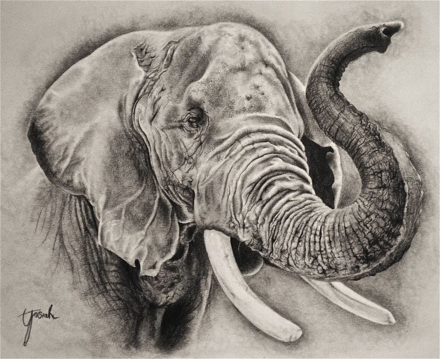 900x733 elephant sketch by eriatarka24 on deviantart