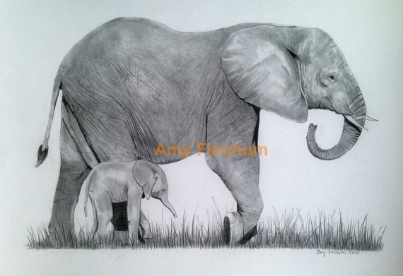 570x391 Elephant Baby Print Pencil Drawing Elephant Black