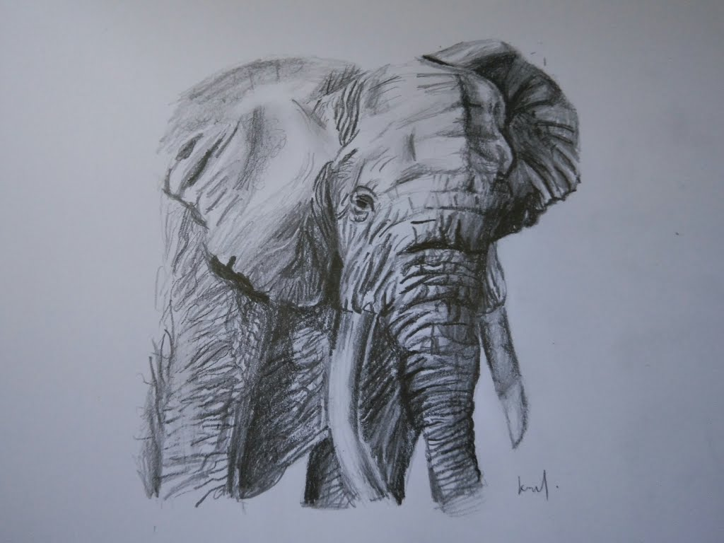 1024x768 How To Draw An Elephant With Pencil (Hbamp8b)