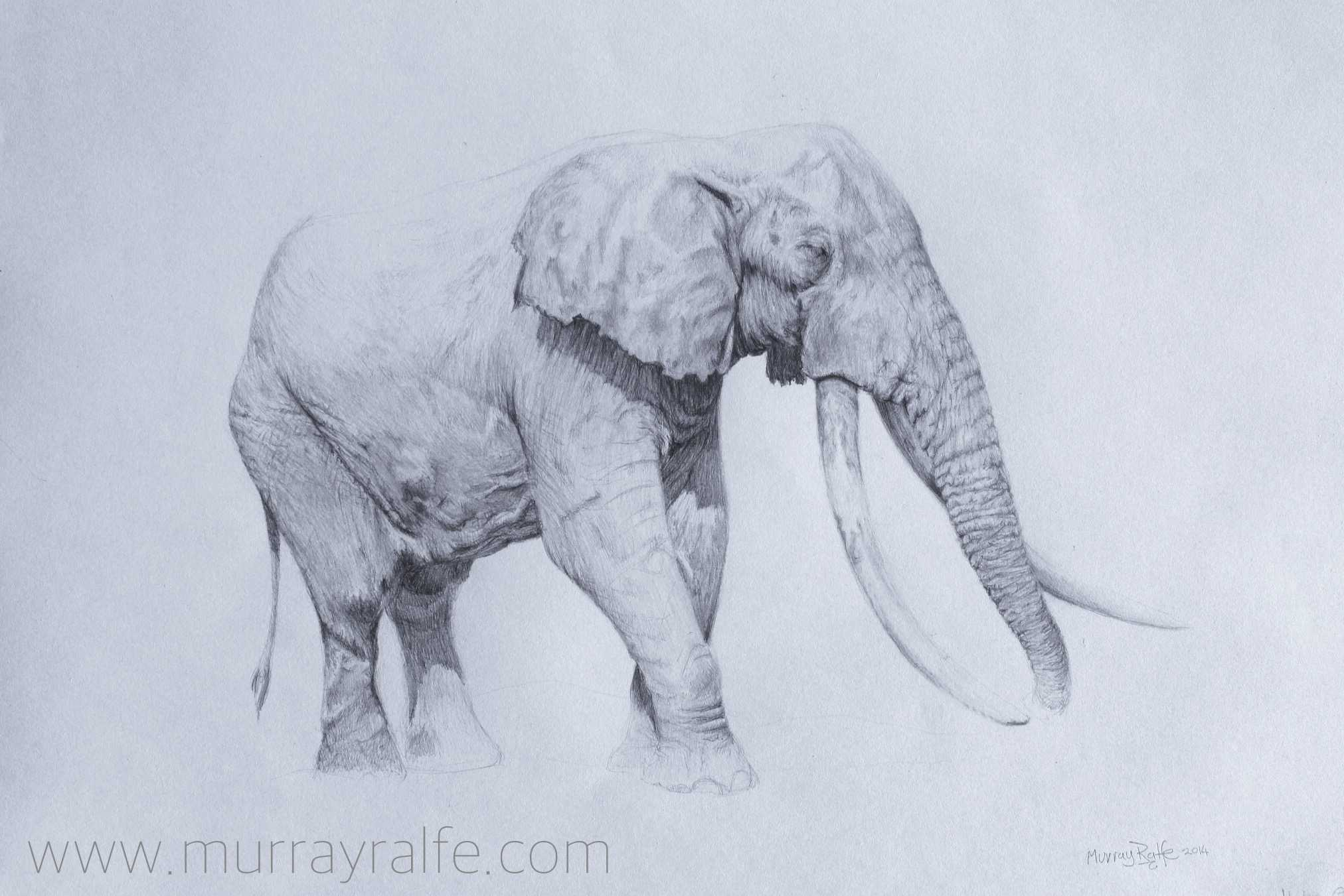 2024x1351 Pencil Drawing Murray Ralfe Art