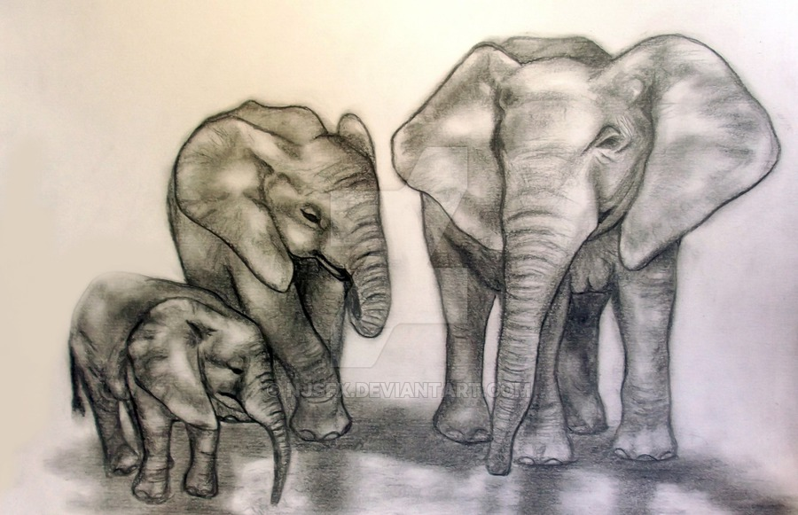 900x581 Pencil Drawing Of Elephants By Njsfx