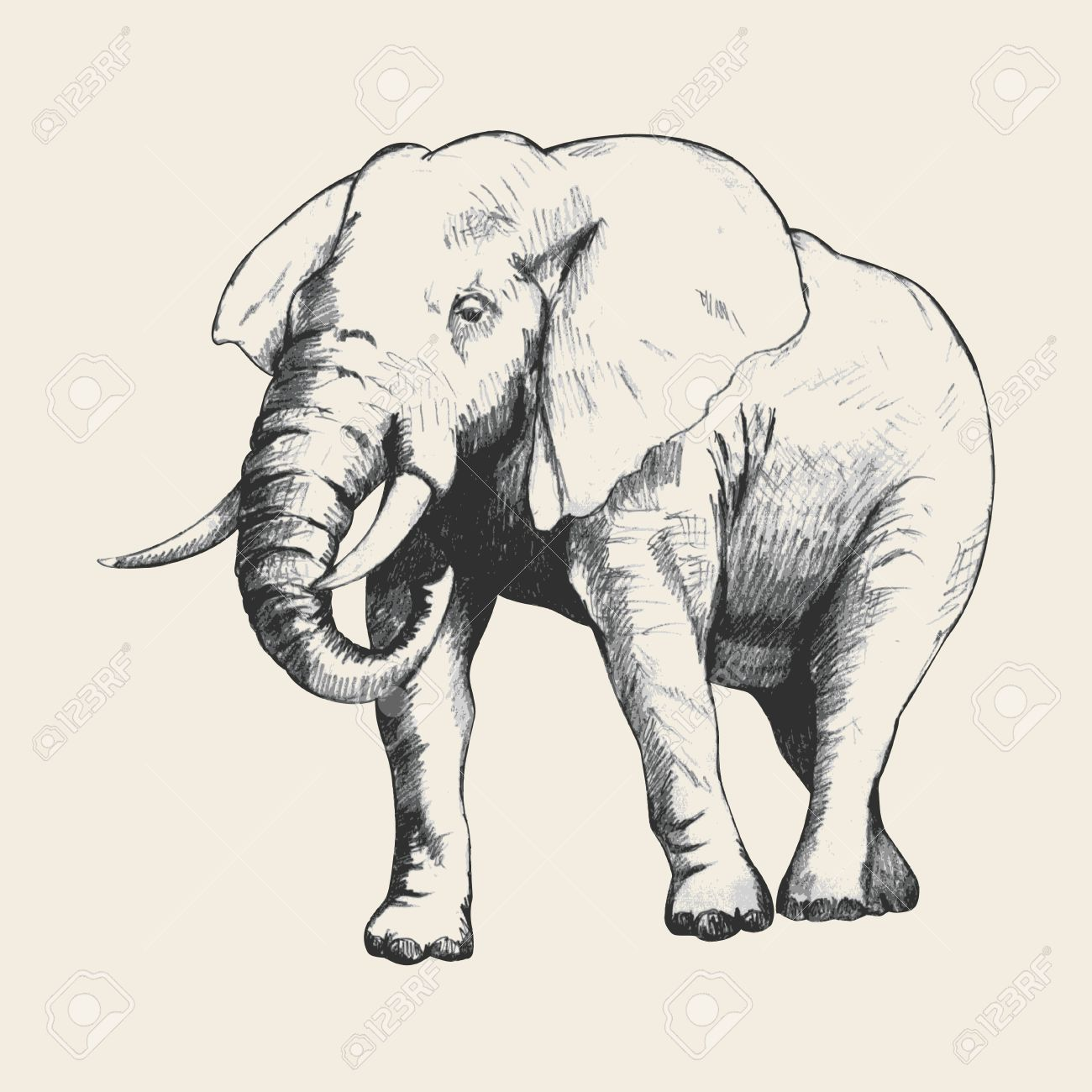 1300x1300 Pencil Sketch Of An Elephant Traced In Adobe Illustrator Royalty