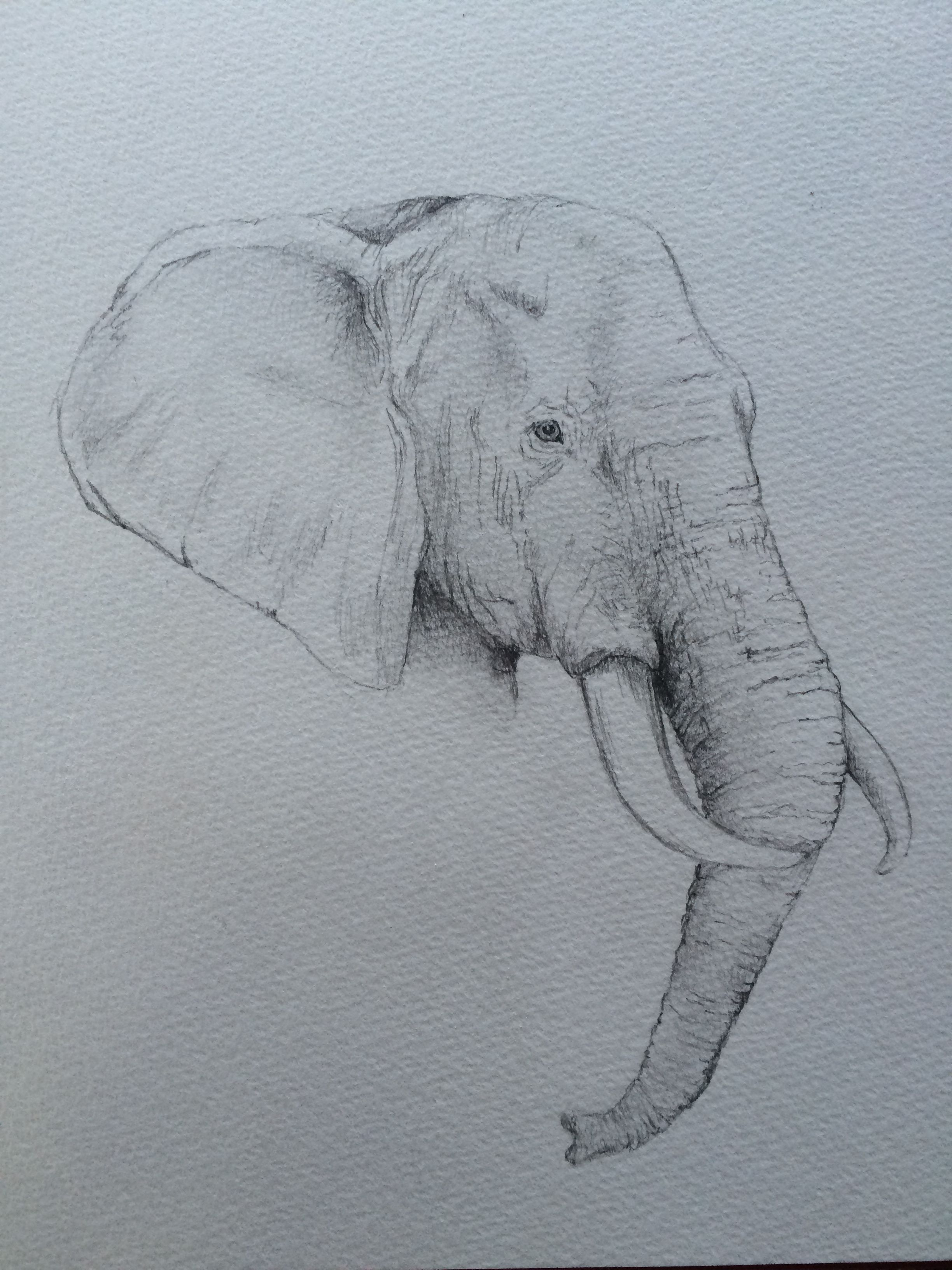 2448x3264 Pencil Drawing, Elephant Paintings Drawings