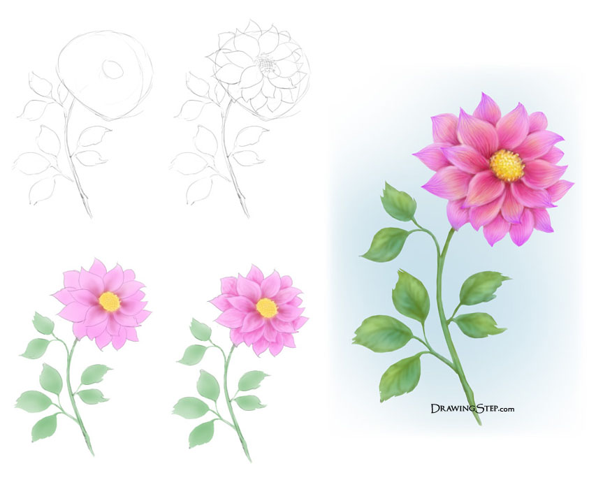843x687 35 Beautiful Flower Drawings And Realistic Color Pencil Drawings