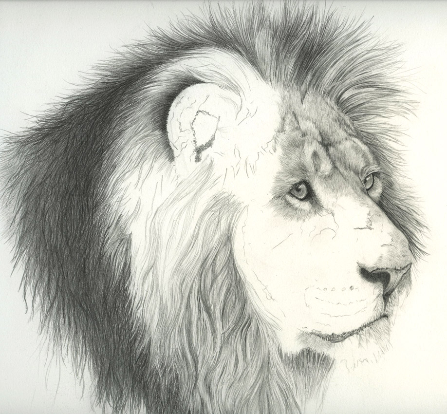 918x850 fur in the paint drawing animal hair