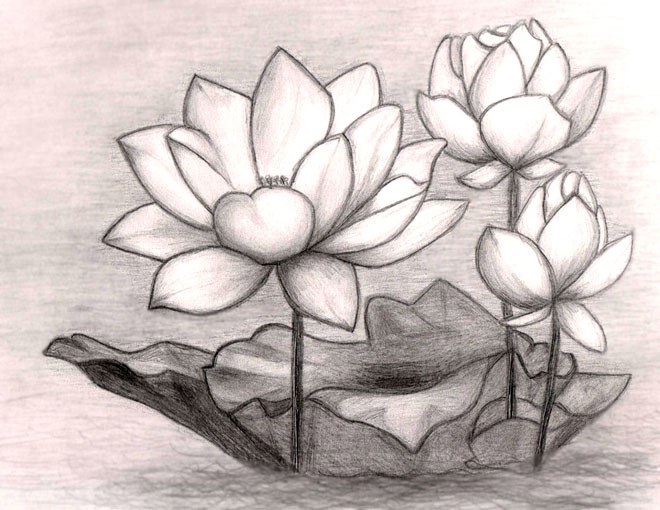 Sketches Of Flowers With Pencil