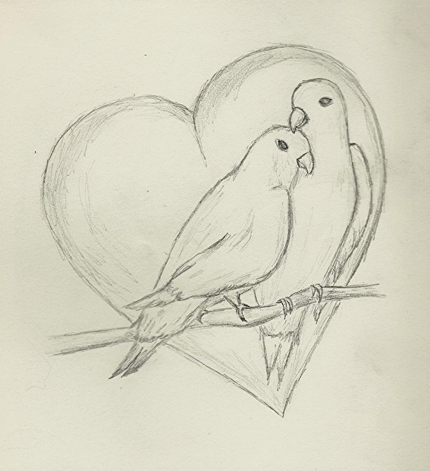 854x935 Pictures Pencil Drawing Images Of Love Birds,