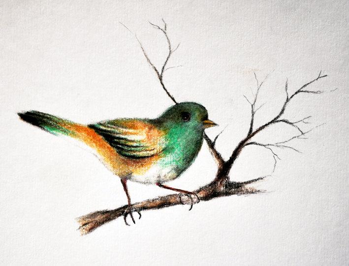 709x540 small bird 2