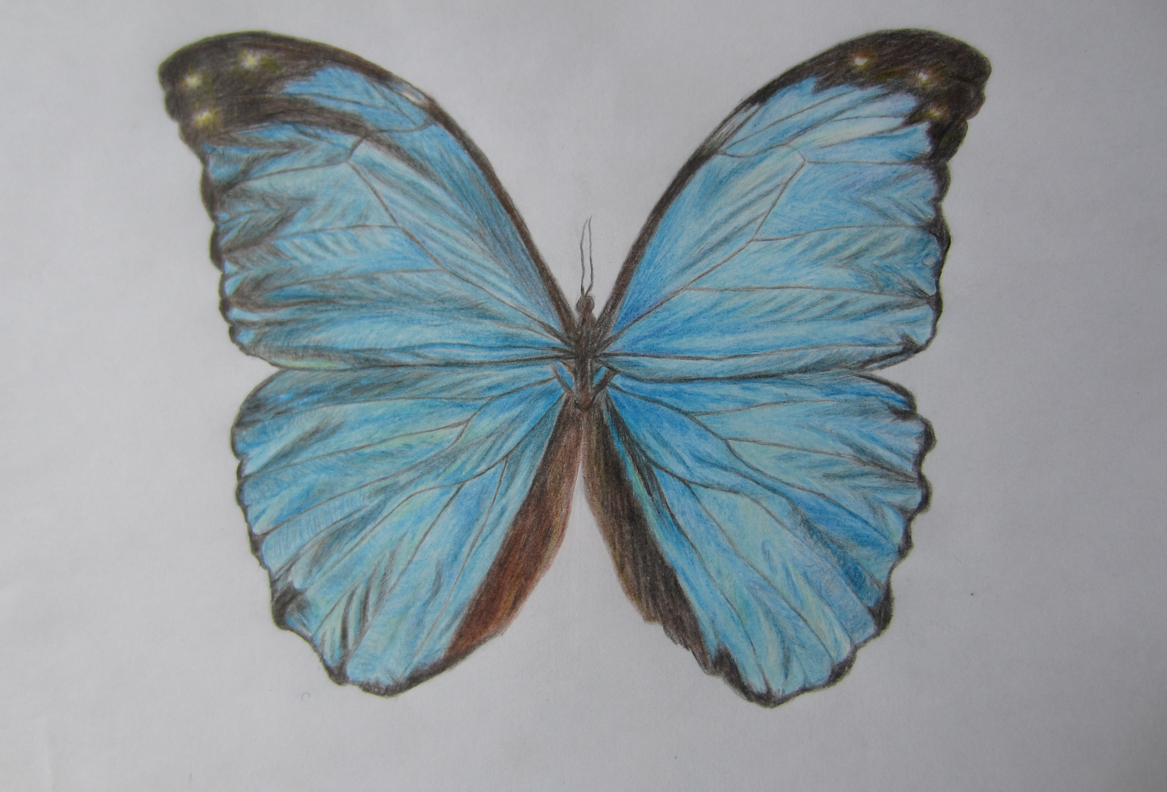 3832x2600 drawing blue butterfly with color pencils