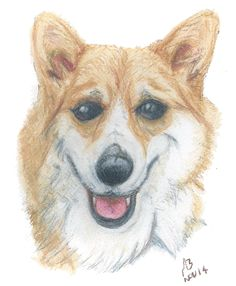 The Best Free Samoyed Drawing Images Download From 10 Free Drawings