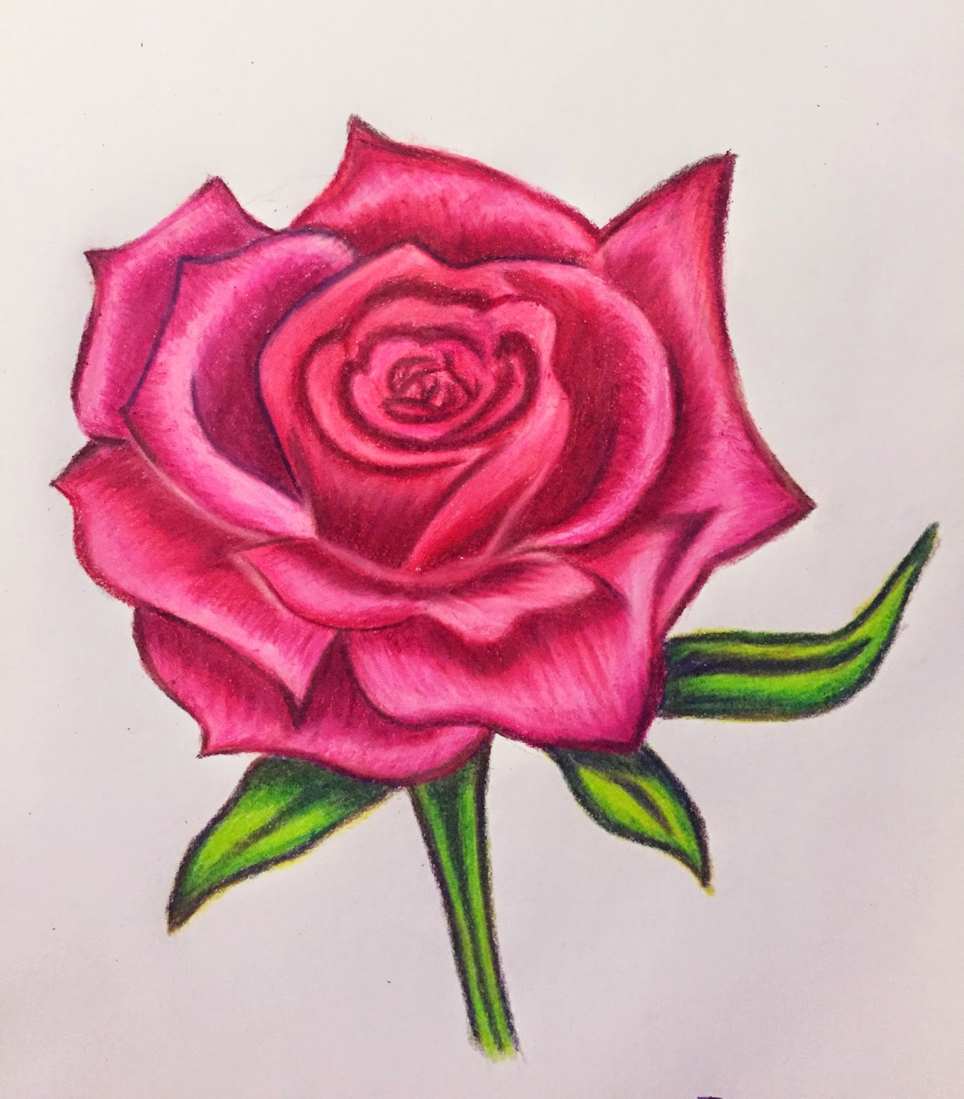 1404x1600 Color Pencil Drawing Flowers Drawing Roses In Colored Pencil