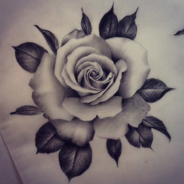 640x640 Drawn rose realistic