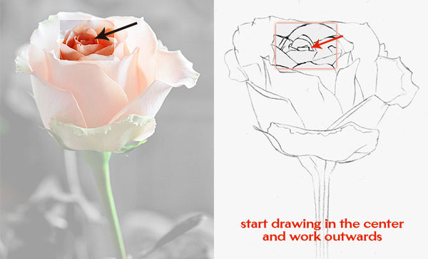 600x364 How to Draw a Rose Learn to Draw Rose Pencil Drawings Art is Fun